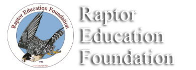 Raptor Education Foundation